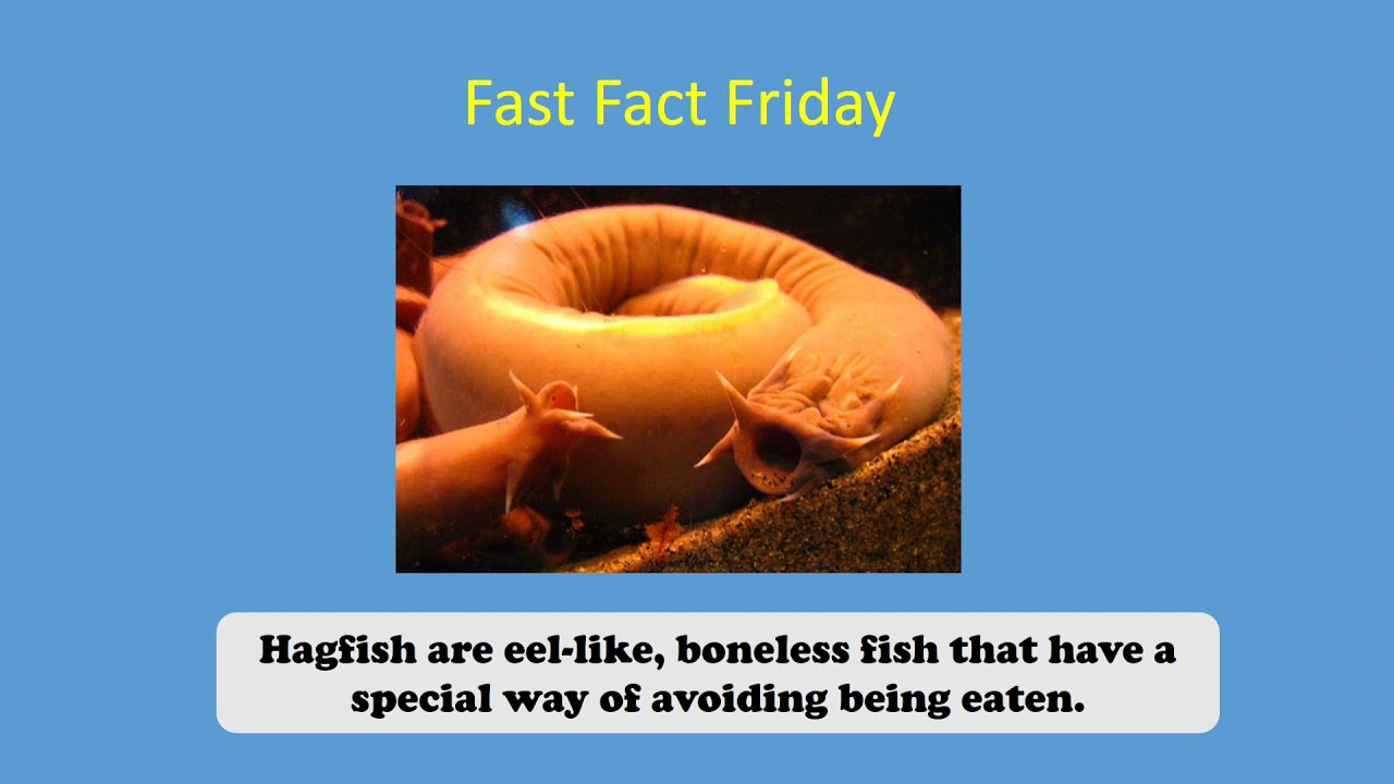 Fast Fact 4/2/2021