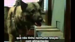 O Cão de Pavlov legendado