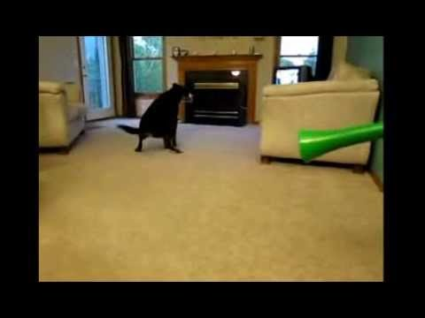 Cute Dog Scared By A Vuvuzela Poops On The Carpet Youtube