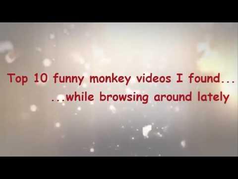 En iyi 10 komik maymun videosu -Derleme 2014 HD(Top 10 Funny Monkey Videos Compilation 2014 HD)