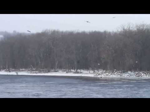 Eagle Viewing on the Upper Mississippi River National Wildlife Refuge