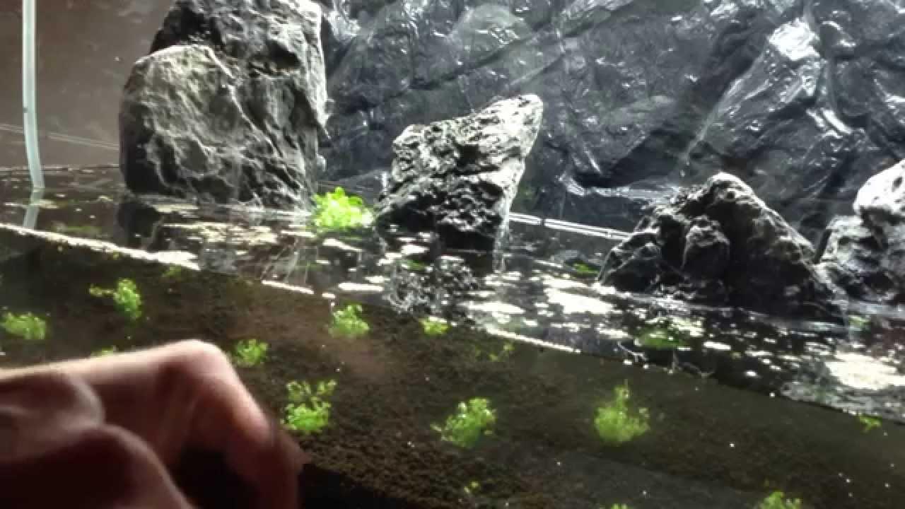 Documental acuariofilia montaje acuario de paisajismo a - Montaje de acuarios ...