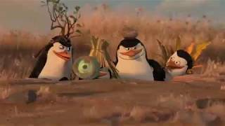 Penguins Comedy you can't stop laughing