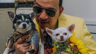 The Top Dogs of New York Fashion Week