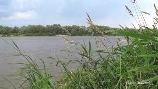 Река. Звуки природы. Красивая музыка. Пение птиц. Релакс. Медитация. Сон