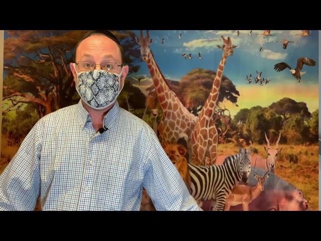 Animal Torah: Snake Edition