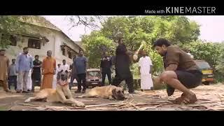 Download Video Mohanlal pulimurugan Whatsapp status 30sec MP3 3GP MP4