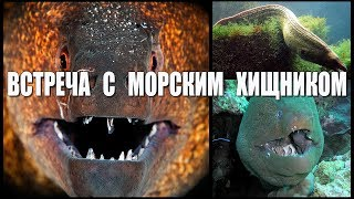 Встреча с Чудовищем Морским  |   Meeting with the Sea Monster