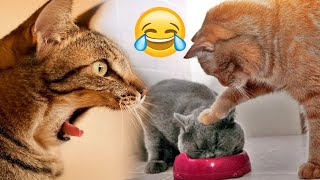 Awesome Cat - you will laugh so hard that you will faint - Funny Cat Compilation | Animals Diary