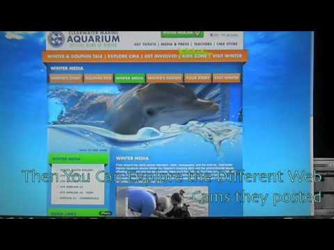 How to see Winter from Dolphin Tale LIVE!!! - YouTube