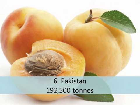 Top 10 Apricot Producing Countries