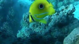 La grande barriera corallina Australiana l'acquario del mondo!