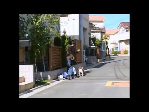 Phim hài Nhật Bản - Chó & Khỉ thông minh phần 1 - Tập 5 [HD] (12:34 )