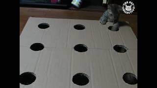 段ボールに穴をあけるだけ。お手製おもちゃで繰り広げる子猫たちのモグラたたき