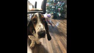 Basset hound Christmas  Sherlock the Basset & Unicorn