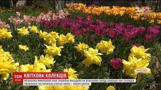 У Миколаєві жінка висадила 150 видів тюльпанів на власному городі