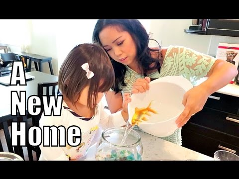 A New Home! - September 18, 2015 -  ItsJudysLife Vlogs