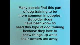 Golden Retriever Puppy Specialists Puppy Training Chewing