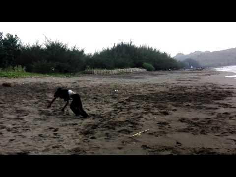 """Parkour Lodoyo - Belajar """" Serang Beach """""""