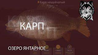 RF4 РР4 Русская Рыбалка 4 Озеро Янтарное Карп