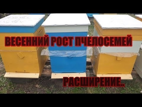 ВЕСЕННИЙ РОСТ ПЧЕЛОСЕМЕЙ\