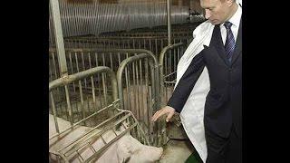 """Путин. Приколы 2014. """" Поросята..."""""""