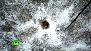 До весны не будить: медведь залёг в спячку в Снежинске