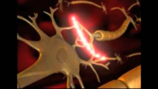 How a Neuron Fires