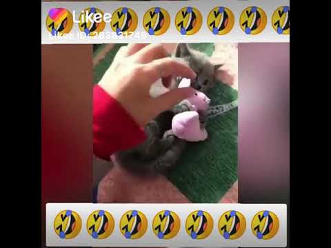 Смешные ролики про котиков Регенератор поднятия настроения:)