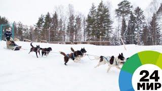 «Берингия»: на Камчатке дали старт самой сложной гонке на собачьих упряжках - МИР 24
