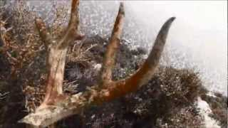 Hunting For Mule Deer Shed Antlers In Wyoming