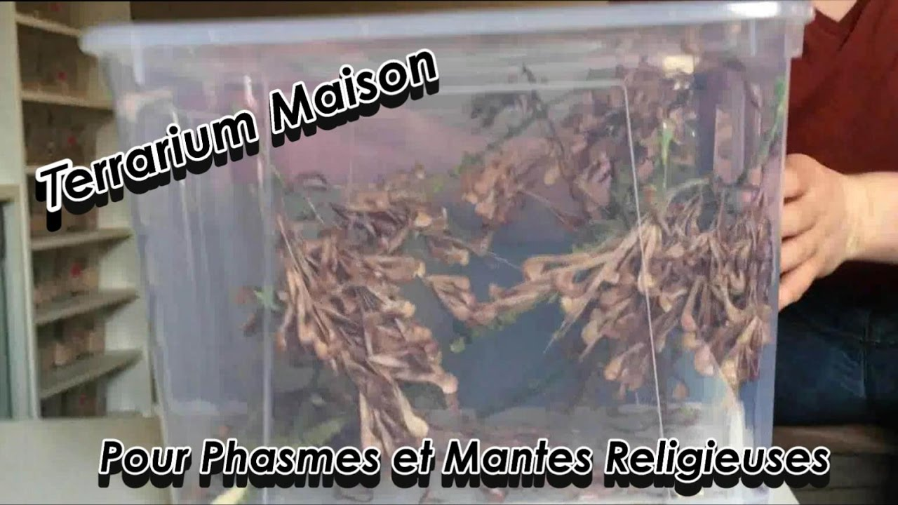 tuto terrarium maison pour insectes phasmes et mantes youtube. Black Bedroom Furniture Sets. Home Design Ideas