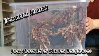 Tuto - Terrarium Maison pour insectes (Phasmes et Mantes)
