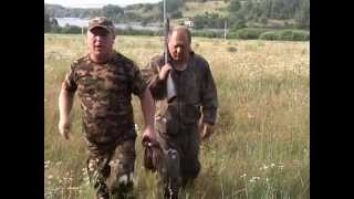 Подготовка собаки к охоте на пернатых.