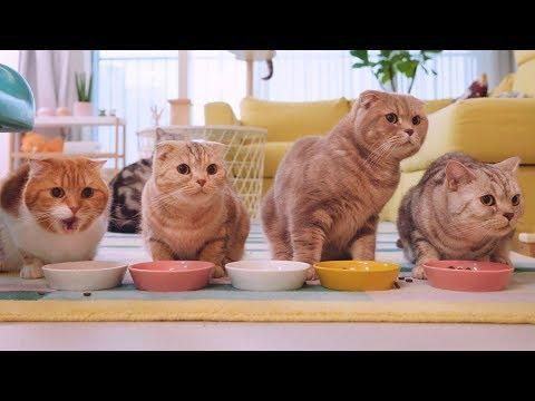 긴장을 늦출 수 없는 고양이들의 식사시간