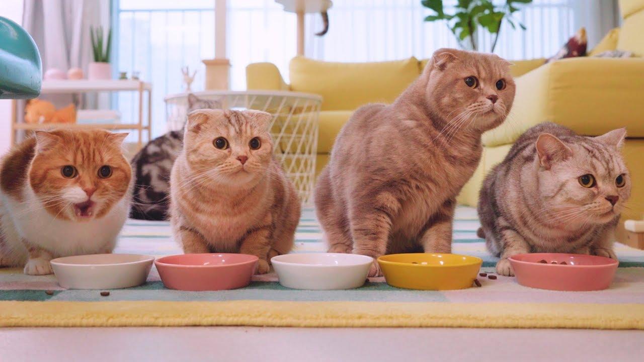 긴장을-늦출-수-없는-고양이들의-식사시간