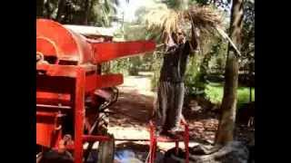 Querim North Goa at Cinatra Residency rice threshing