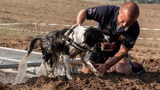 Hard Dog Race 2016.10. 01. Piliscsév - official HDR after video