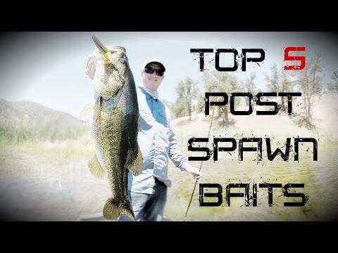 Top 5 Post Spawn Baits