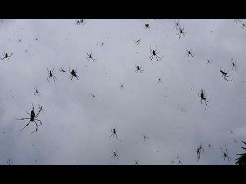 Quot Chovendo Aranhas Quot Quot It S Raining Spiders Man Quot Youtube