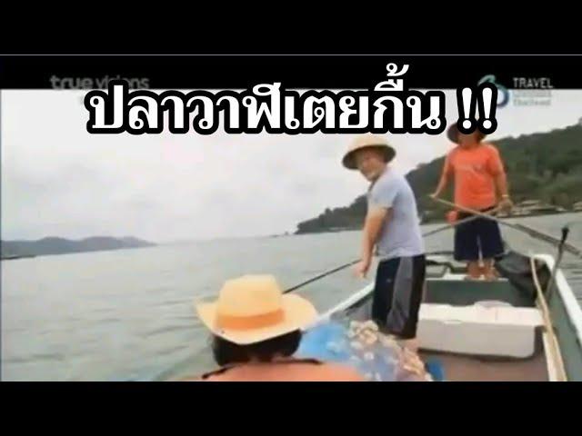ขมอย ! ปลาวาฬเตยกื้น ! โผดผาน ! ฝรั่งพูดไทย