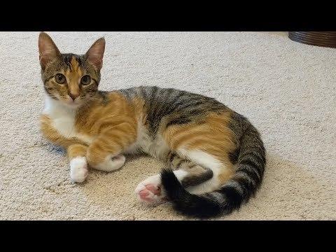 Kittens and Cats make an Infomercial