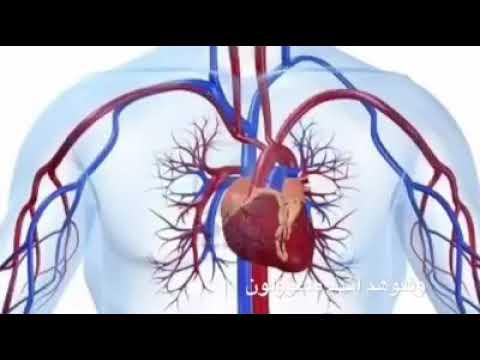 معلومه طبيه و ادويه طبيعية للقلب و اهميه الزنجبيل في حياتنا و اهميته لامراض القلب