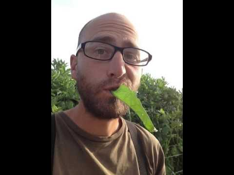 All Good Things Organic Seeds- A Conversation With Organic Farmer Justin Huhn