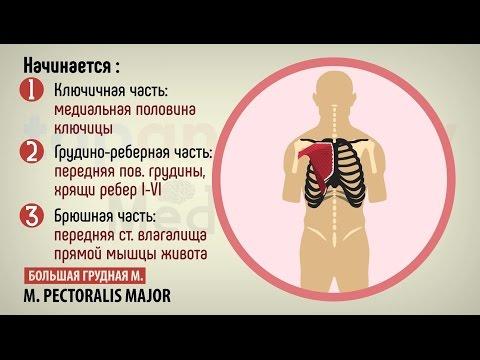 Люмбальные синдромы при поясничном остеохондрозе