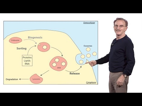 Randy Schekman (HHMI & UCB) 3: How human cells secrete small RNAs in extracellular vesicles