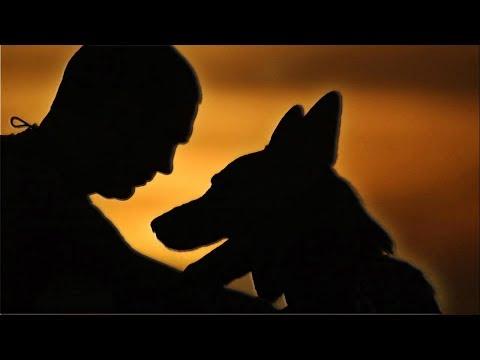 Про собак. Стихотворение
