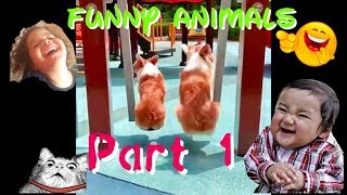 Funny Animals part 1