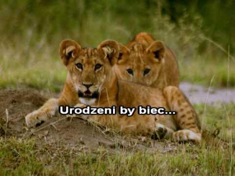 Karaoke - Budka Suflera - Młode Lwy