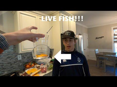 LOSER EATS LIVE FISH!!! | Vlog #3